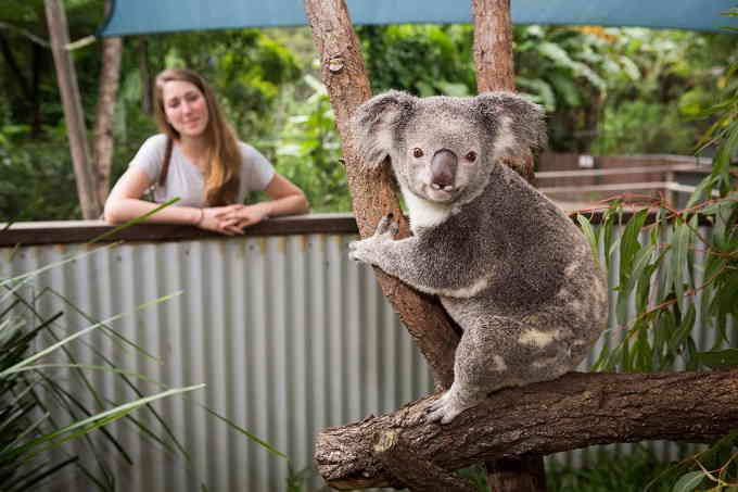 morning tea with koala