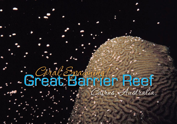 Coral Spawning The Great Barrier Reef Australia.
